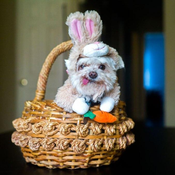 Tex_Bunny
