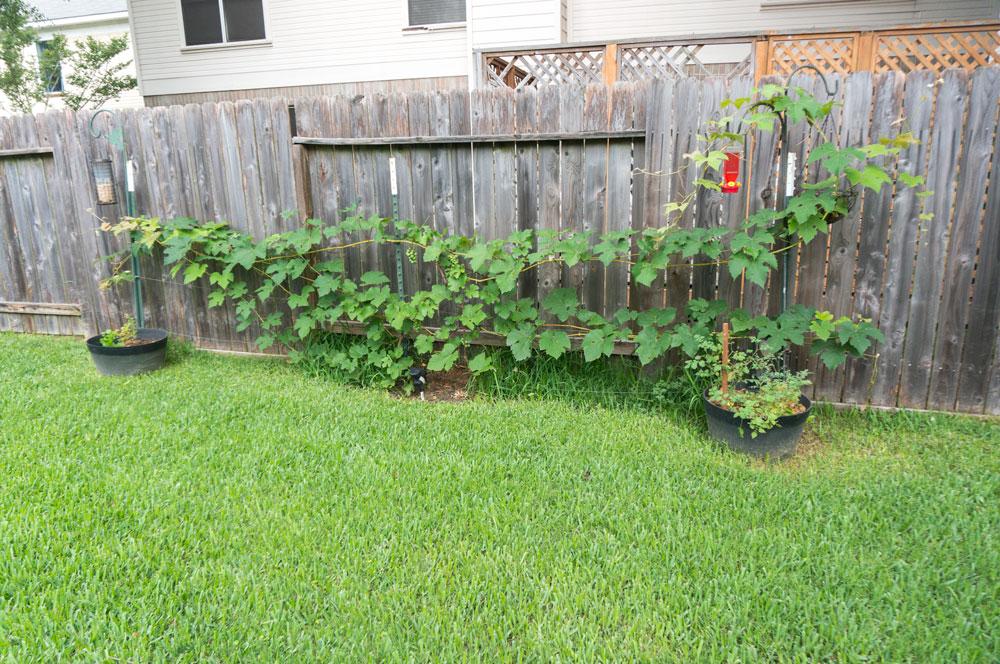 Summer Garden update | svgimmeshelter
